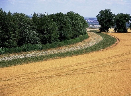 picture Syngenta